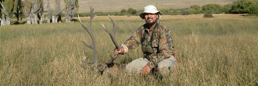 red-stag-hunts-banner