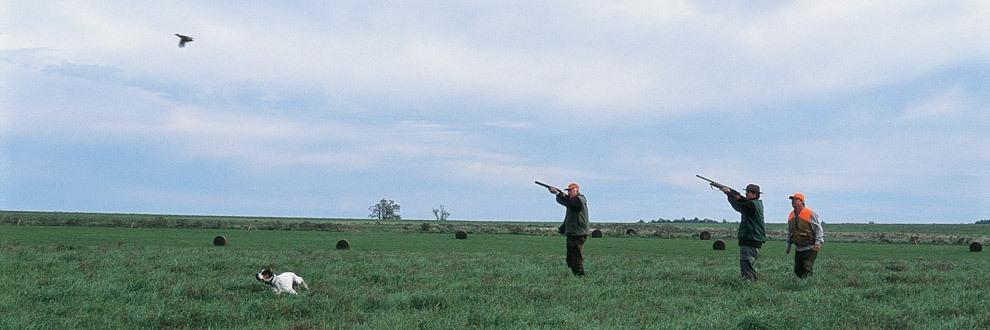 wsa-perdiz-hunting-banner