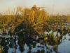 duck-banner